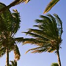 Palm Trees.  by Michael Stocks