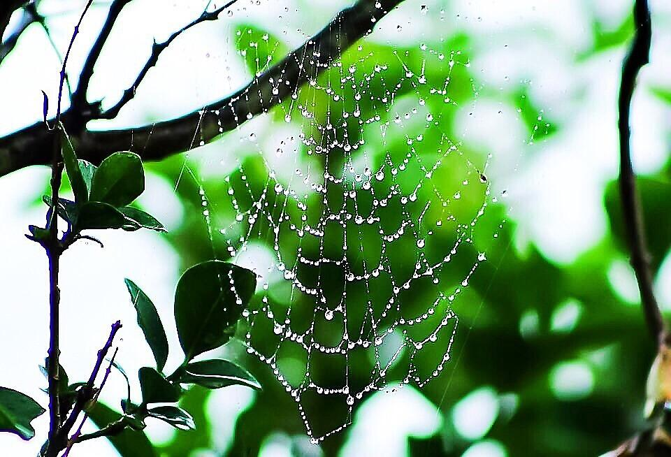 The Skys Diamonds Clinging To A Spider Web  by JodiSharp