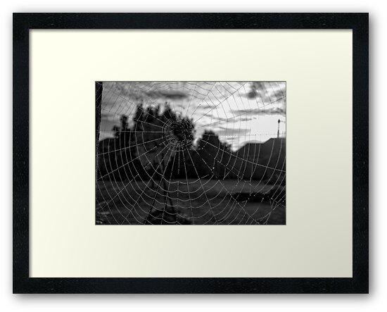 Spider Web by agentgreen