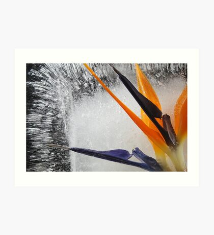 Frozen Paradise Art Print