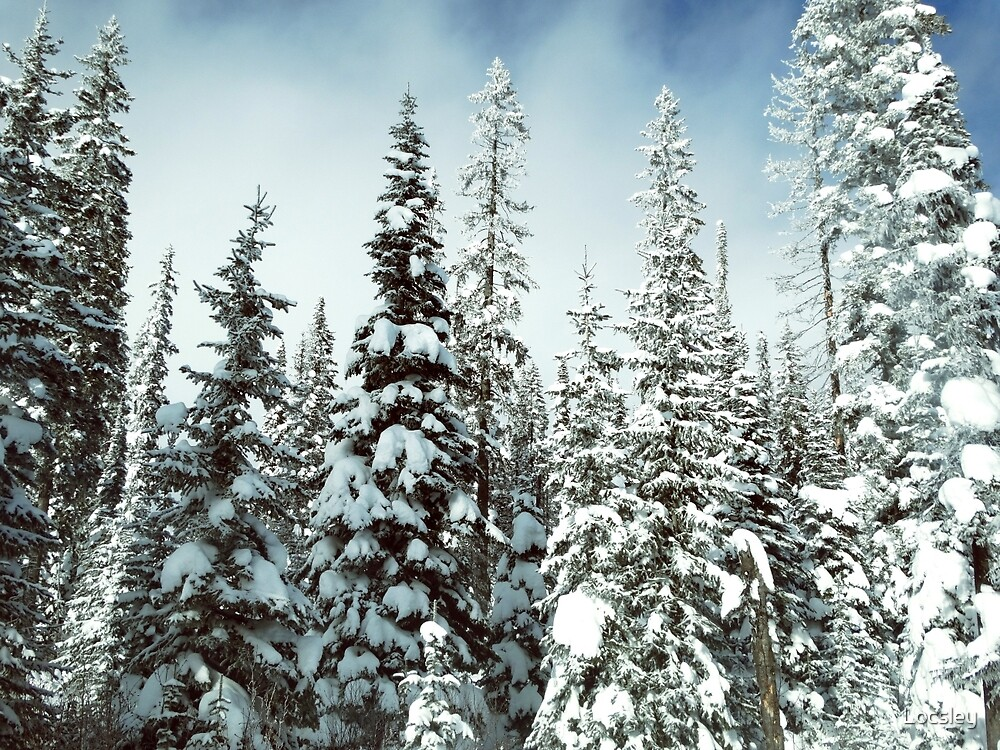 Canadian Winter Forest by Locsley