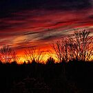 Elkland Township Sunset by Penny Fawver