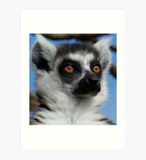 Watching His Group - Ring-tailed Lemur Art Print