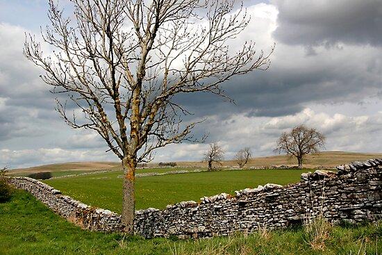 Pennine Rural Landscape by John Wallace