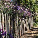 Garden Fence by vigor