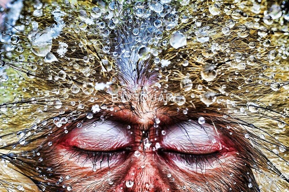 Zigidy Jay Makak by BJVSQUARE