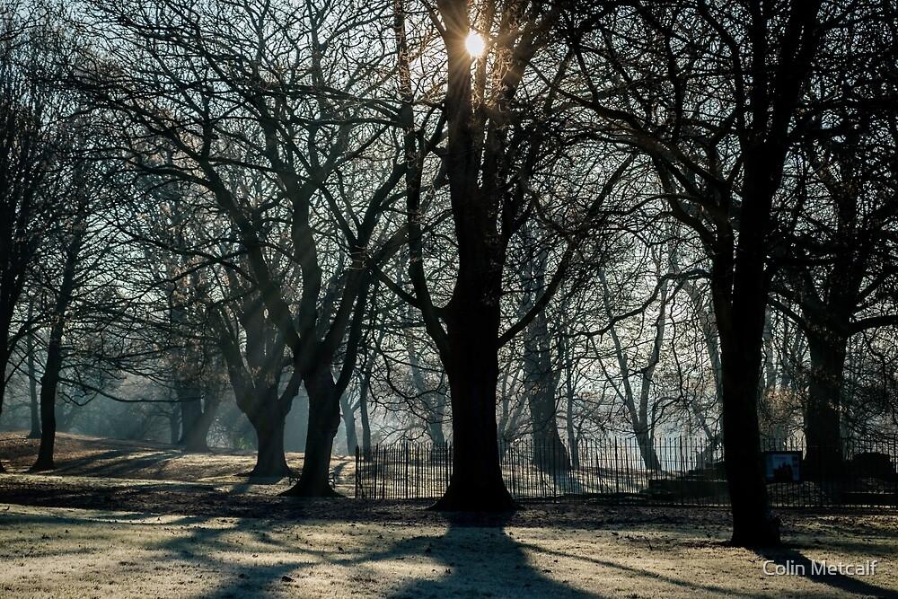 Winter Sun by tyke29