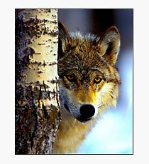 TIMBER WOLF; Vintage Wilderness Print Photographic Print