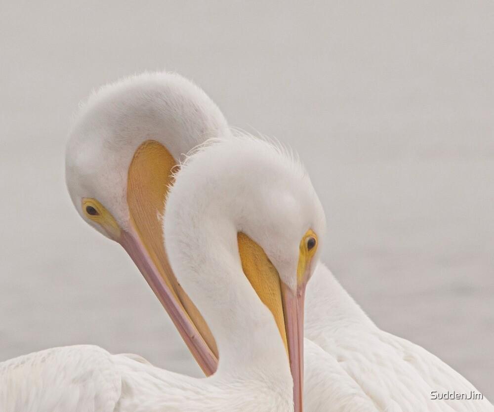 White Pelicans by SuddenJim