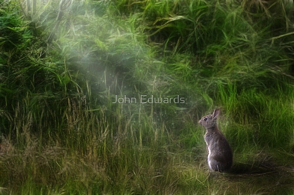 The Glade by John Edwards