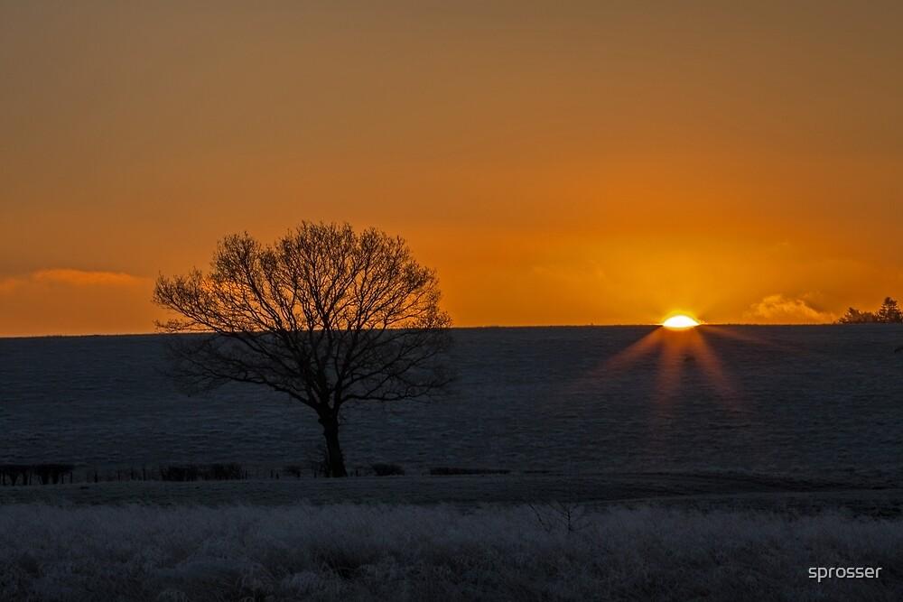Golden wonder, morning breaks! by sprosser