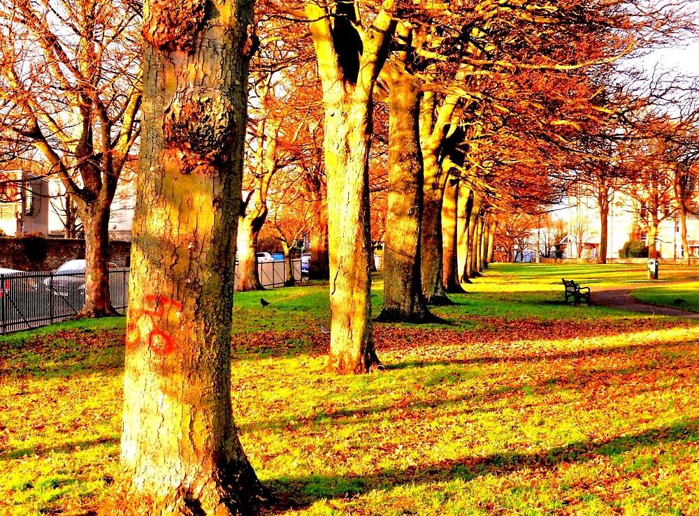 Victoria Park in Evening Sun by Nik Watt