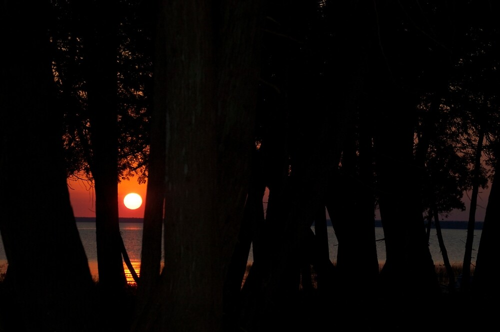 Lake Sunset Through the Trees by alyssajames18