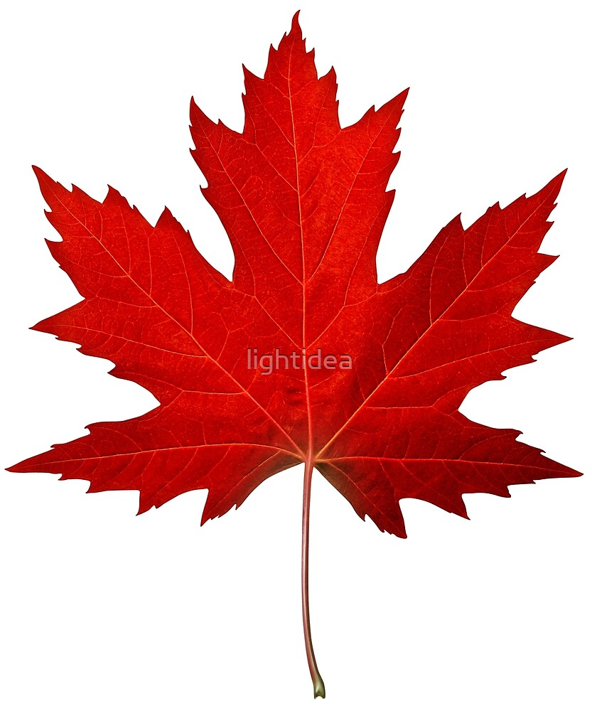 Canadian Maple Leaf by lightidea