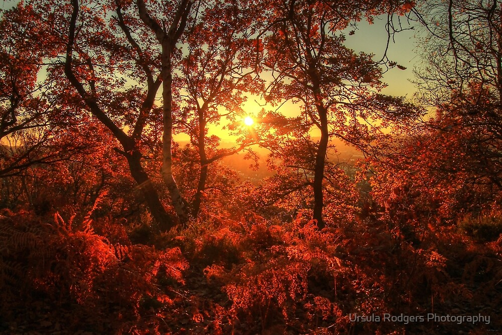 Autumn Glory by Ursula Rodgers Photography