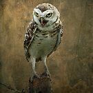 It's An Owl by Karen  Helgesen
