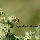 Bee-Enjoy the little things in life by Russell Voigt