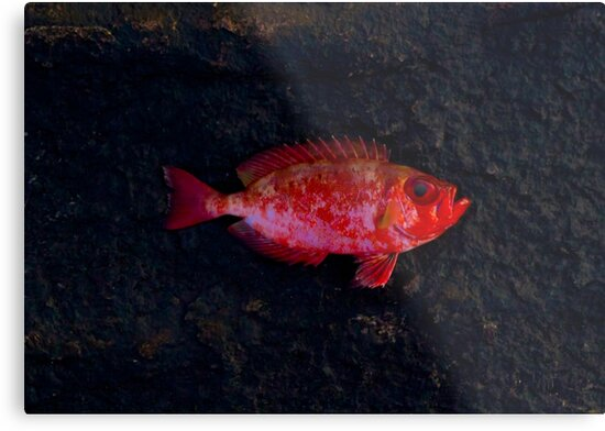 Red Fish by Philipe3d