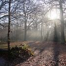Misty woodland in winter by Phill Sacre