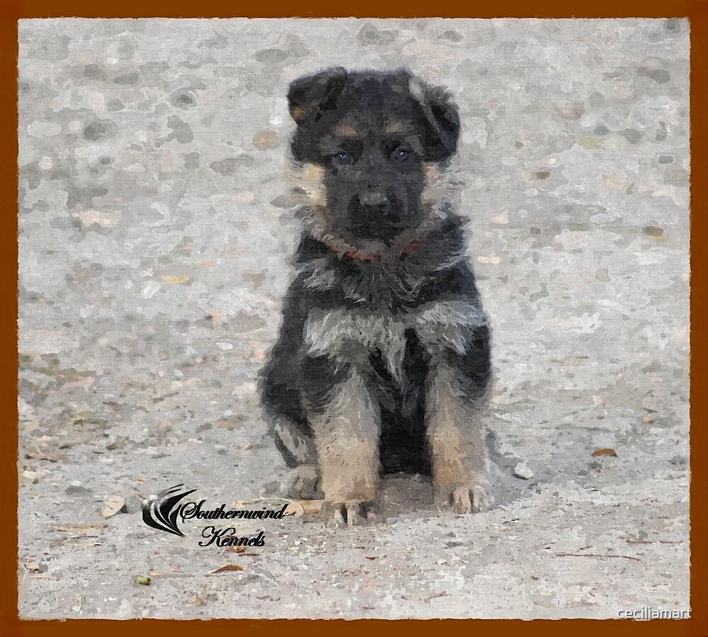 German Shepherd Puppy  by ceciliamart