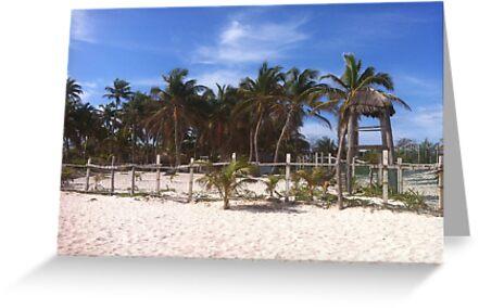 Windy Palms by aquariusrising