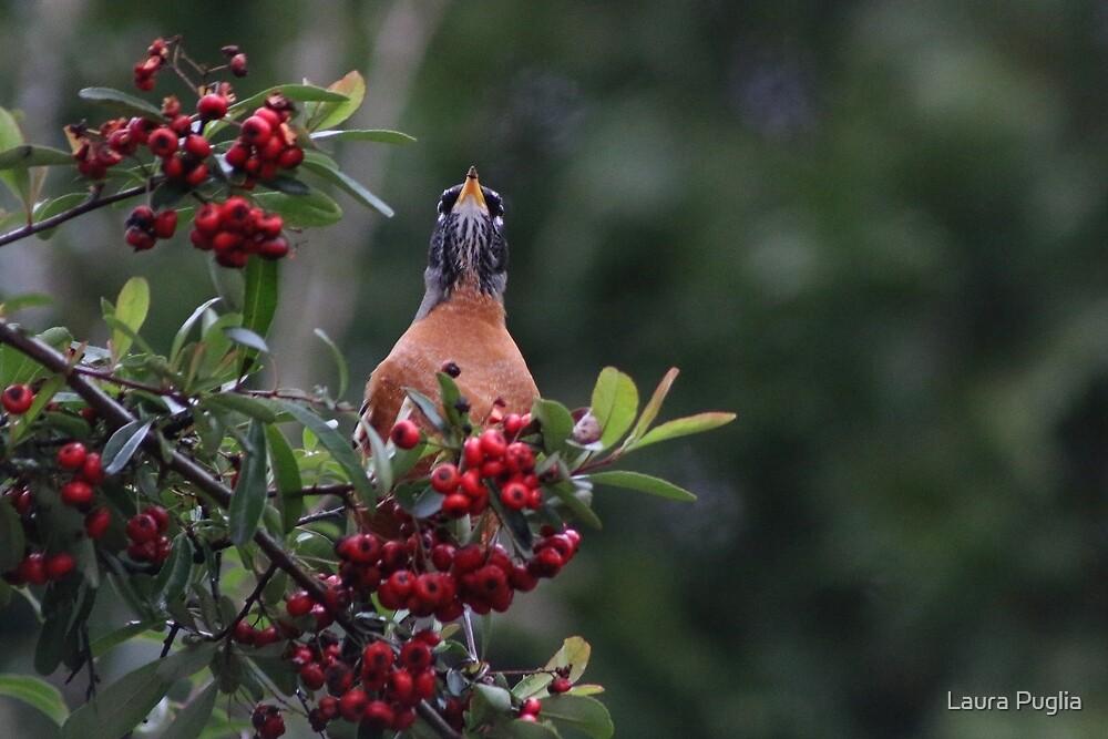 Red Robin by Laura Puglia