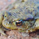 frog by marxbrothers