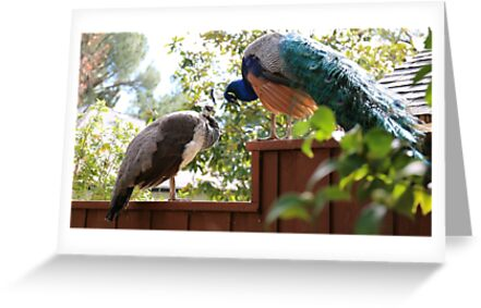 Queen and King of the Peacocks by paigelacombe