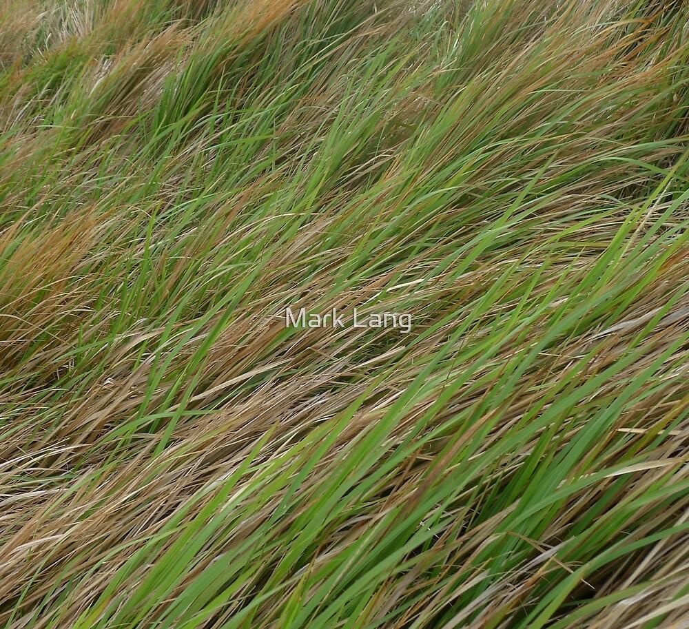 Windblown grass by Mark Lang