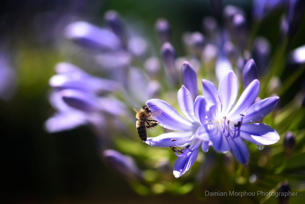 Scents of nectar by Damian M Photographer