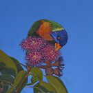 Lorikeet and Gumblossoms 1 by Alison Murphy