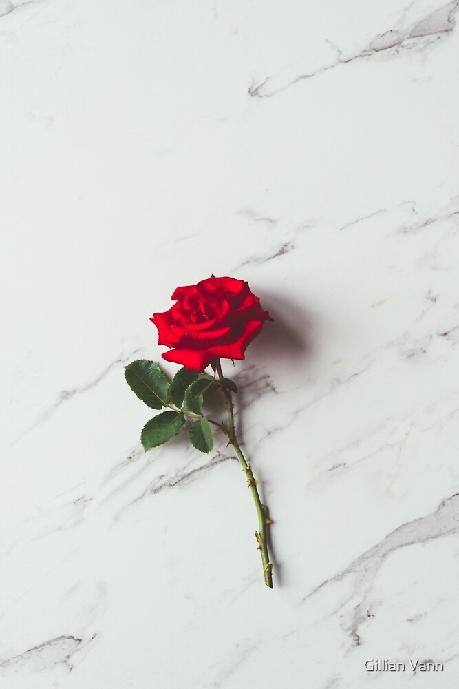 single red rose on marble background by Gillian Vann