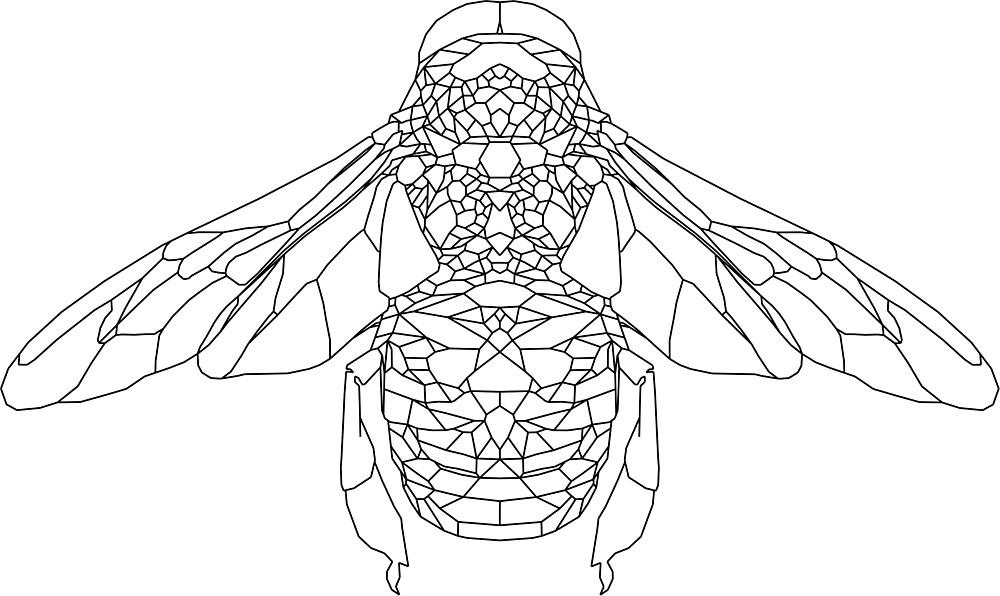 Bee Geometry  by vinesandveins