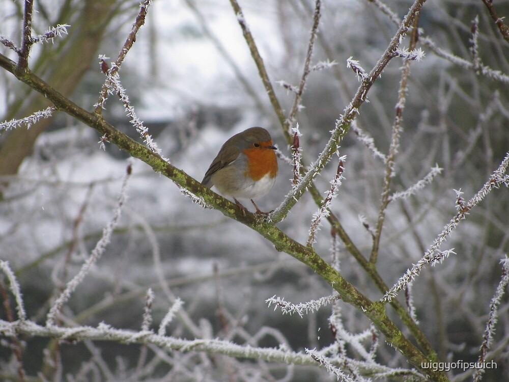 Robin and Winter Scene by wiggyofipswich