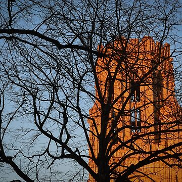 Wills Memorial Tree Silhouette  by LiamOR