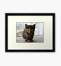 Tortie kitten Framed Print