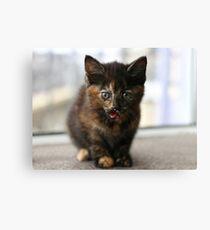 Tortie kitten Canvas Print