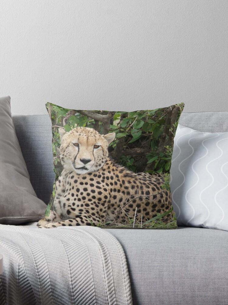 African Cheetah Chilling Print by Aariv Originals by aariv