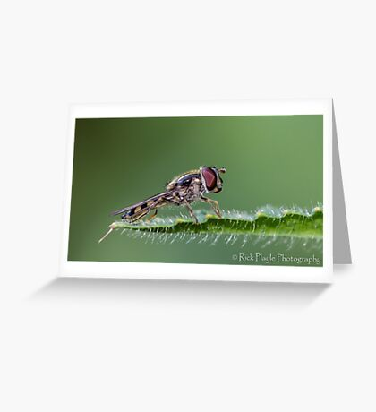 Hover at rest Greeting Card