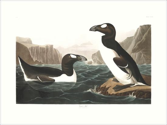 Great Auk - John James Audubon by billythekidtees