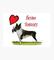 i love boston terriers by tony fernandes Photographic Print