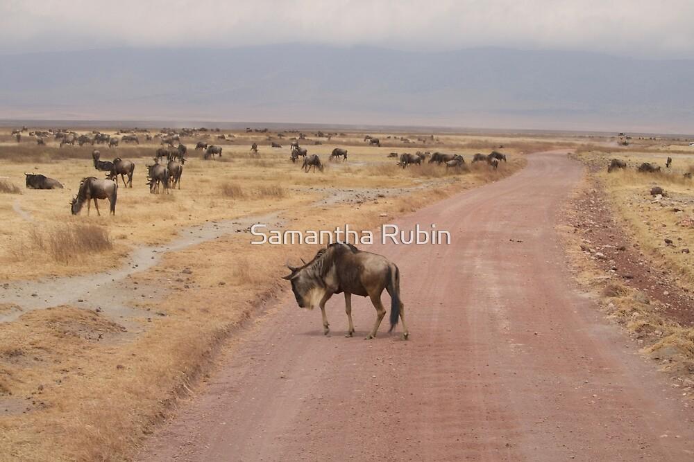 A Herd of Wildebeests by Samantha Rubin