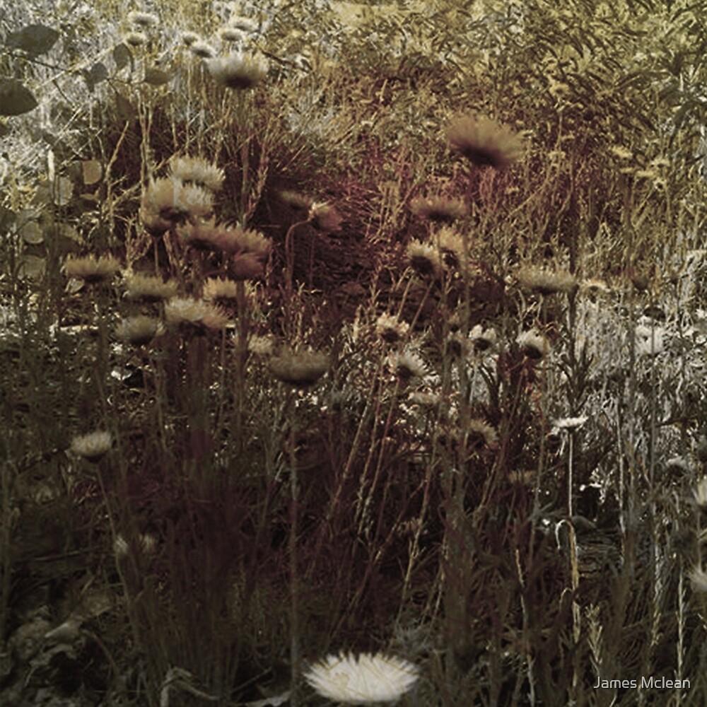 Rust Flowers by James Mclean