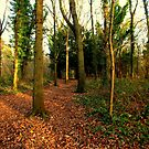 Woodland Walk by Livvy Young