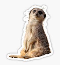 Meerkat Sticker