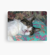 Honey Sleeping Canvas Print