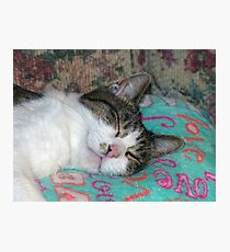 Honey Sleeping Photographic Print
