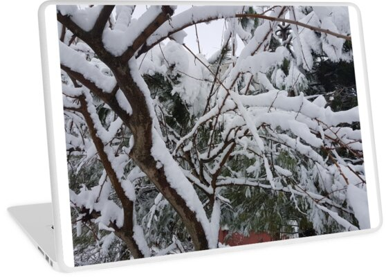 snowy by mgan25