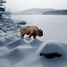 Spirit Buffalo Before a Frozen Lake by Wayne King
