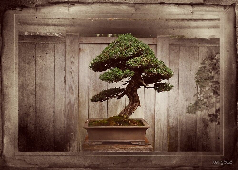 Bonzai Tree by keng612